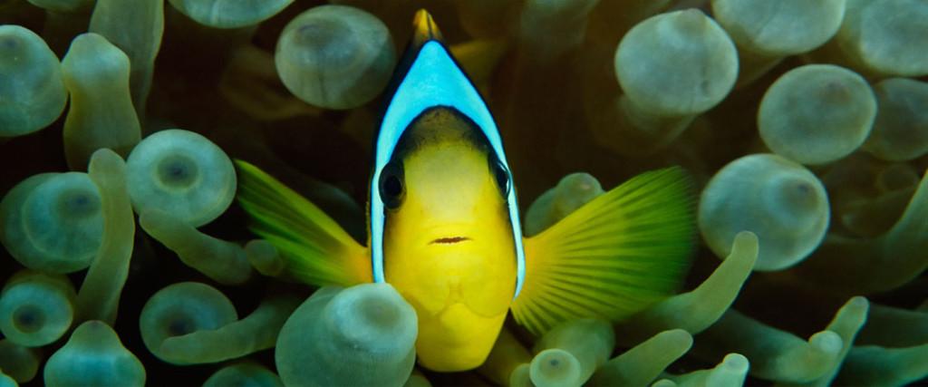 fish-450